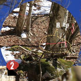 樹液の収穫は雪解けの頃のわずか二週間。 夜間はマイナス、日中の気温が 5〜10℃の日が採集の目安です。